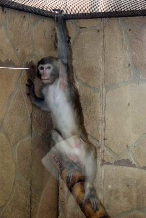 Как мы ходили на выставку карликовых обезьян