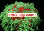 Причины иммунодефицита и способы укрепления иммунитета