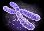 Отбор эмбрионов перед ЭКО абсолютно безопасен
