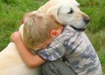 В Польше собака спасла трехлетнего ребенка